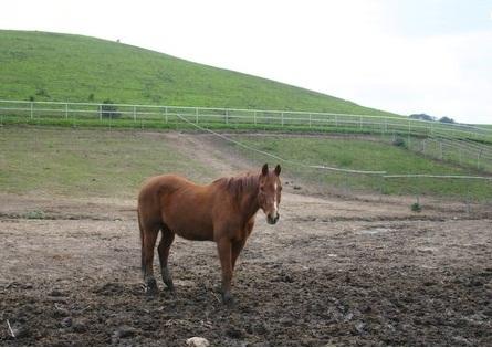 muddy_pasture