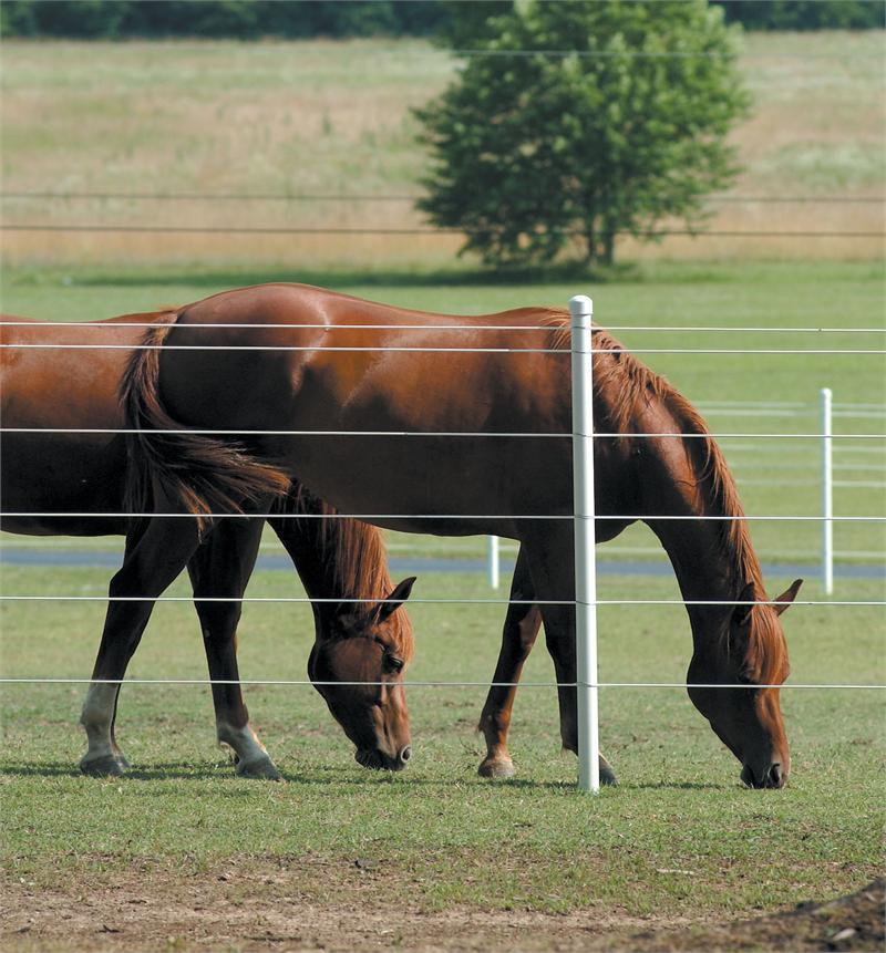 overgrazing-horses