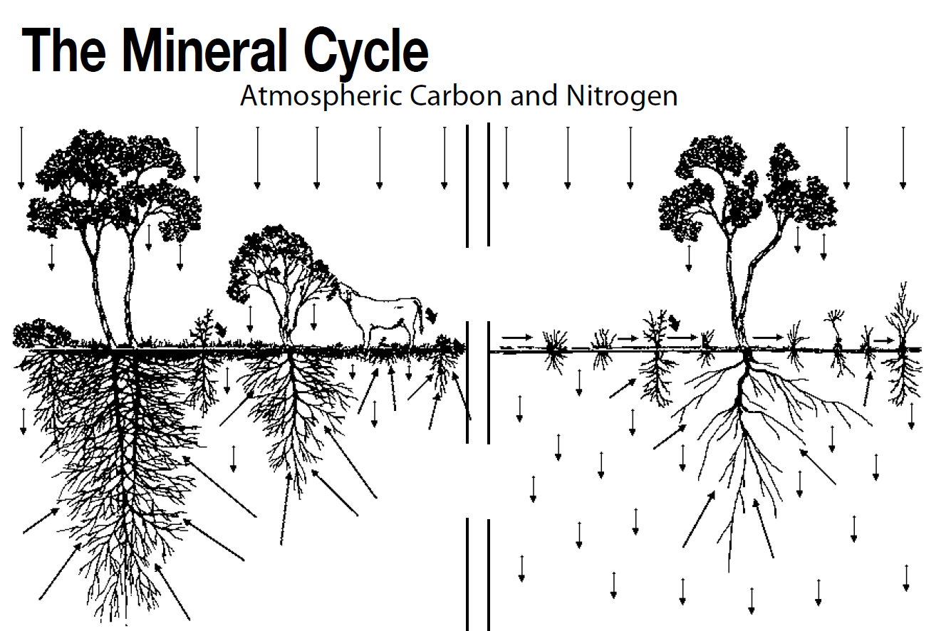 mineral-cycle